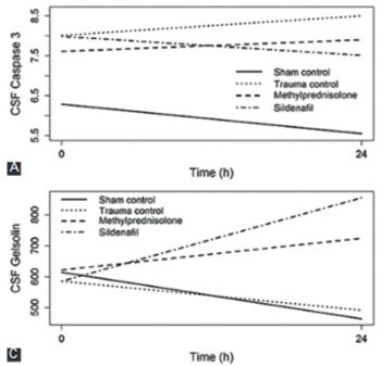 Neuroprotective effects of sildenafil in experimental spinal cord injury in rabbits