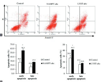 Small interfering RNA-mediated silencing of nicotinamide phosphoribosyltransferase (NAMPT) and lysosomal trafficking regulator (LYST) induce growth inhibition and apoptosis in human multiple myeloma cells: A preliminary study