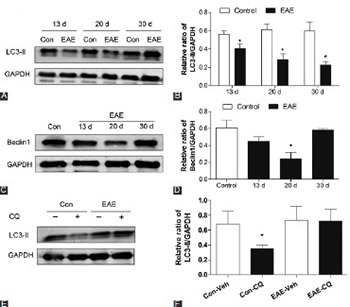 Defective autophagy is associated with neuronal injury in a mouse model of multiple sclerosis