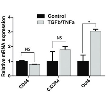 CD44 silencing decreases the expression of stem cell-related factors induced by transforming growth factor β1 and tumor necrosis factor α in lung cancer: Preliminary findings