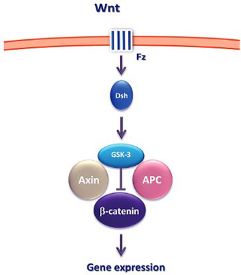Epigenetic alterations of the Wnt signaling pathway in cancer: a mini review