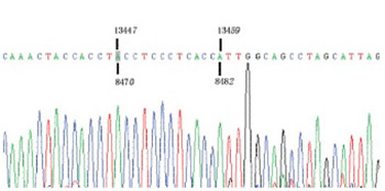 Mitochondrial DNA 4977 bp deletion is a common phenomenon in hair and increases with age