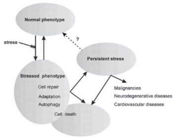 Clinical implications of cellular stress responses