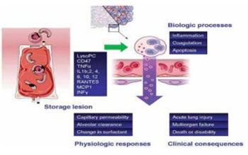 Red Blood Cell Storage Lesion
