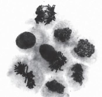 The Genotoxicity of Vitamin C in vitro