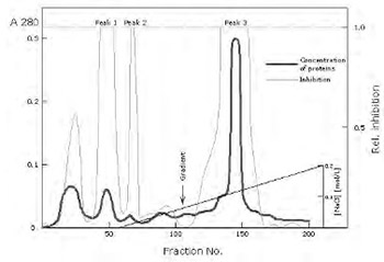 Isolation and immunochemical characterization of human cystatin C