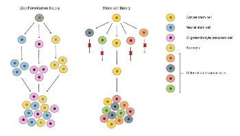 Genetics of glioblastoma