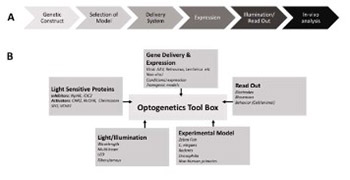 Optogenetics: Therapeutic spark in neuropathic pain