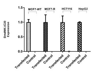 Recombinant deoxyribonucleoside kinase from Drosophila melanogaster can improve gemcitabine based combined gene/chemotherapy for targeting cancer cells