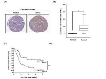 Integrin beta 4 (ITGB4) and its tyrosine-1510 phosphorylation promote pancreatic tumorigenesis and regulate the MEK1-ERK1/2 signaling pathway