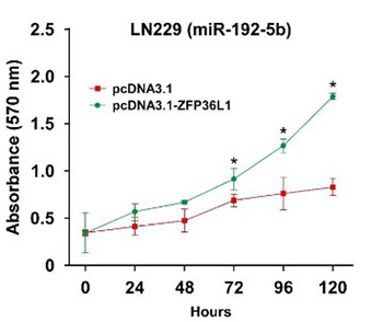 Overexpression of microRNA-129-5p in glioblastoma inhibits cell proliferation, migration, and colony-forming ability by targeting ZFP36L1