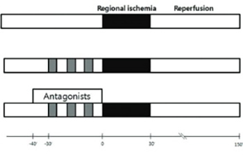 Remifentanil-induced preconditioning has cross-talk with A1 and A2B adenosine receptors in ischemic-reperfused rat heart