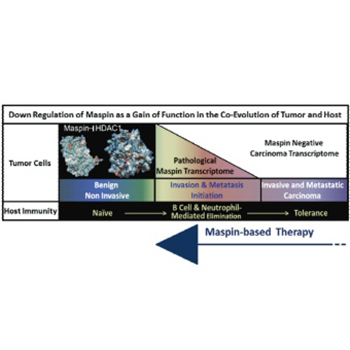 Tumor suppressor maspin as a modulator of host immune response to cancer
