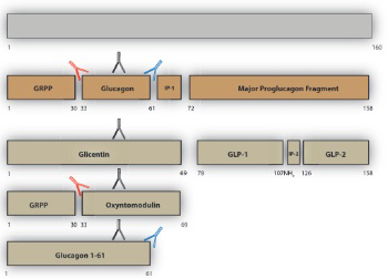 Do glucagonomas always produce glucagon?